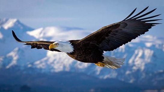eagle-sky-640-360px