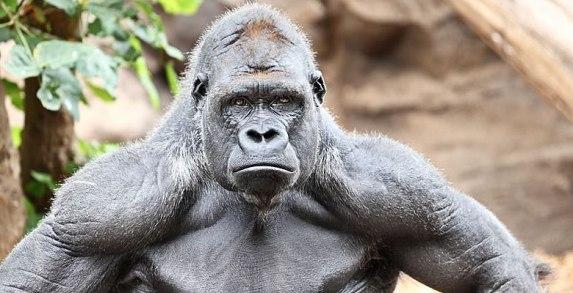 800lb-Gorilla-Amazon